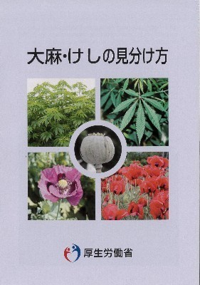 A大麻・けしの見分け方.JPG